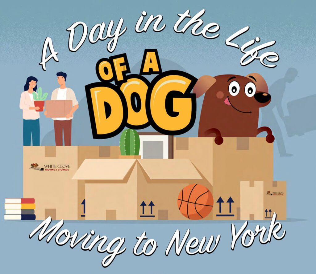 Moving to New York With a Dog