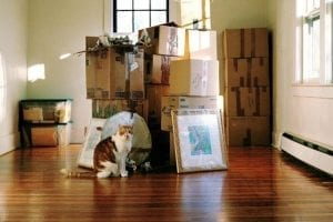 Move into New Home with Professional Movers